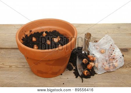 Pot And Bulbs