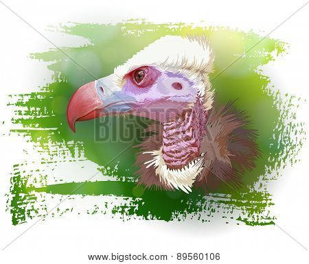 Vulture portrait & green background