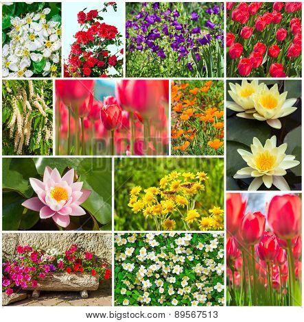 Set Of Garden And Field Flowers