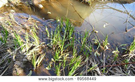 Swamp Area