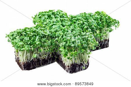 Fresh Green Cress Salad isolated on white background