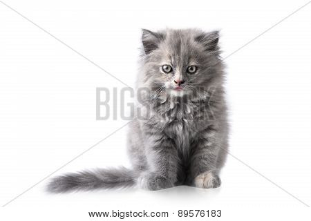 Portrait Of A Little Cat Or Kitten Isolated