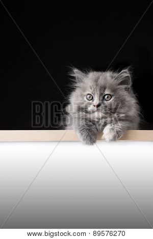 Cat Isolated Behind Signboard