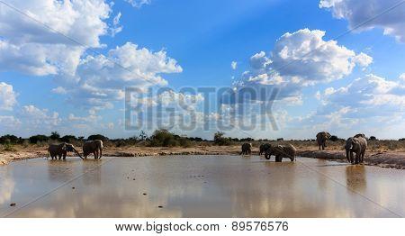 Elephants The Gathering