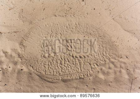 Footstep Elephant Versus Human