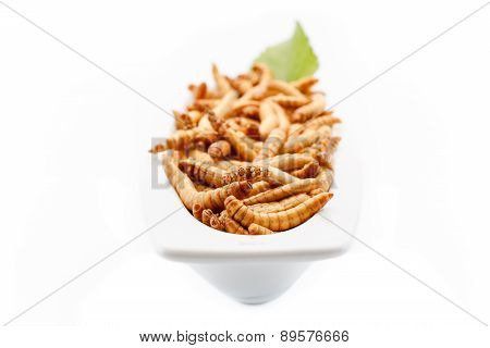 Healthy Mealworms Close Up With Decoration