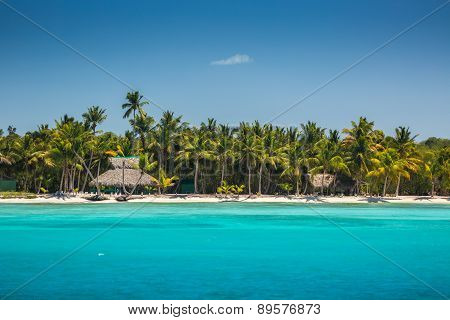 Palm Trees On The Tropical Beach, Dominican Republic