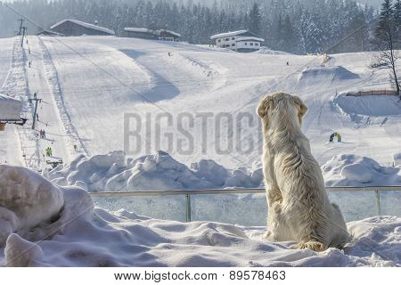 Dogs Enjoy Looking At The Sky Slope