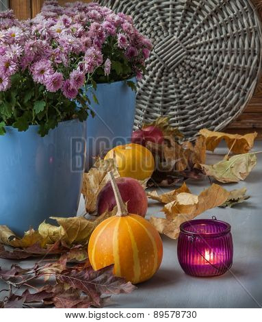 Pumpkin And Chrysanthemum