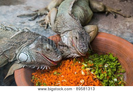 Two iguanas eating