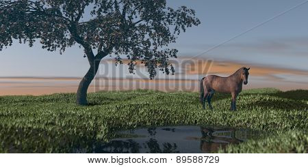 horse under blossoming cherry tree in grassland