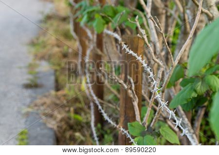 Barbed Wire And Overgrown Plants