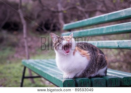 Homeless Cat Sitting On The Bench And Yawns