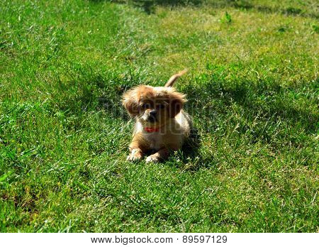 Cute Dog Sitting In Grass