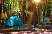 image of tent  - Tent Camping in the Redwood National Park in California United States - JPG