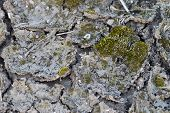 stock photo of mud  - Cracked mud with spots of green moss - JPG