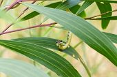 foto of jungle snake  - Green snake on tree close up shot  - JPG