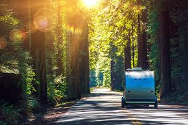 image of recreational vehicle  - Camping in Redwoods - JPG