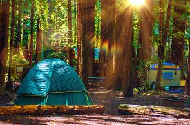 stock photo of species  - Tent Camping in the Redwood National Park in California United States - JPG