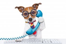 image of working-dogs  - jack russell dog on a call center using the phone or telephone and computer pc keyboard isolated on white background - JPG