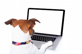 picture of working-dogs  - jack russell dog booking searching or browsing online the internet with a laptop pc computer screen isolated on white background - JPG