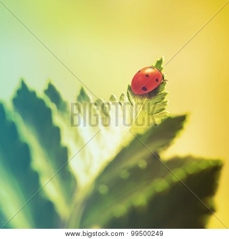 ladybug on green leaf. Filtered image: vintage effect.