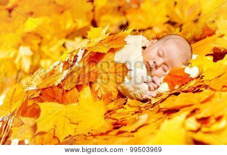 Autumn Baby Sleeping, Newborn Kid In Fall Yellow Leaves, Asleep New Born