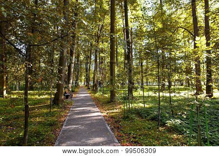 Walkway Lane Path With Green Trees In Forest. Beautiful Alley In Park. Early Autumn, End Of August.