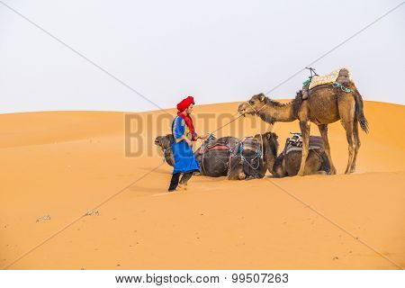 MERZOUGA, MOROCCO, APRIL 13, 2015: Local man in traditional attire and his camels on sand dunes of Erg Chebbi