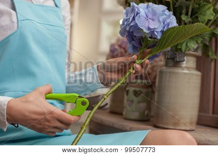 Skilled young saleswoman is caring of the flowers