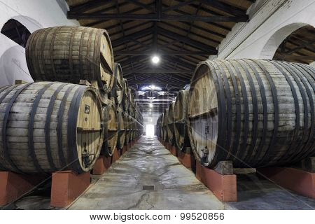 Vineyard and wooden barrels