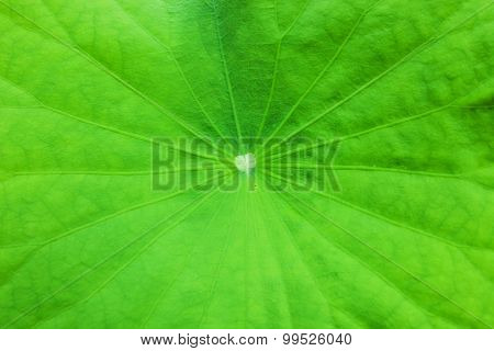 Fresh Natural Green Leaf Texture Background