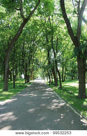 park with many green trees