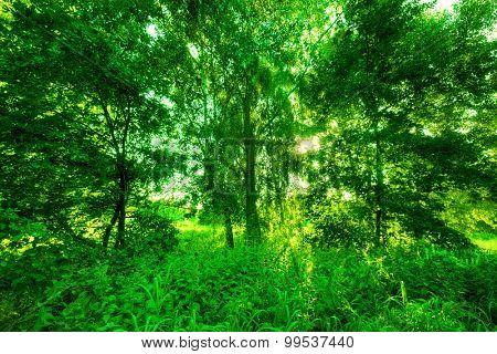 Green summer park. Sun shining through trees, leaves. Nature theme