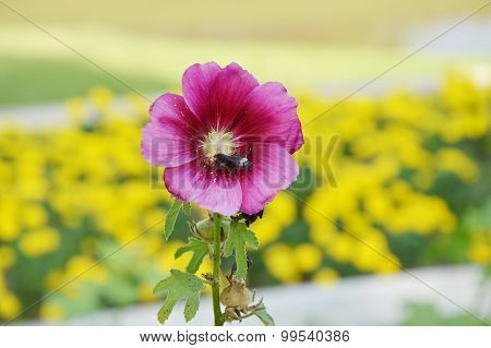 flower bee to swarm