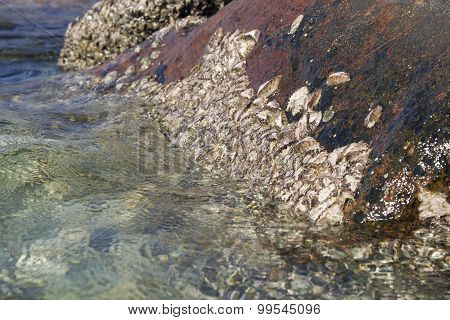 Clams stuck to rocks against incoming waves