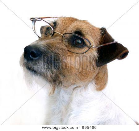 Schwere Hund