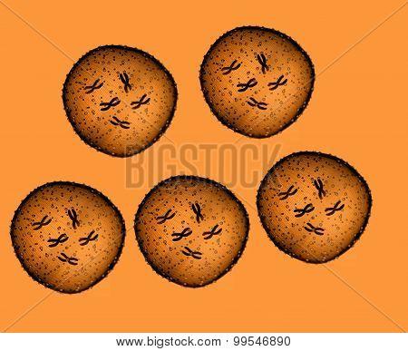 Five Microbe Orange Seen In A Microscope In A Medical Office