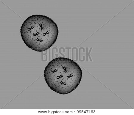 Two Microbe Black And White Seen In A Microscope In A Medical Office