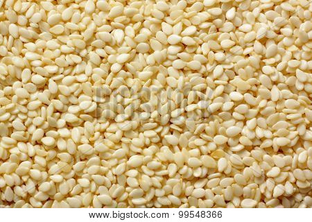 Sesame Seeds Close-up