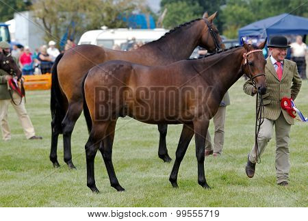Champion horses