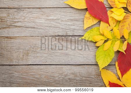 Colorful autumn leaves on woden background with copy space