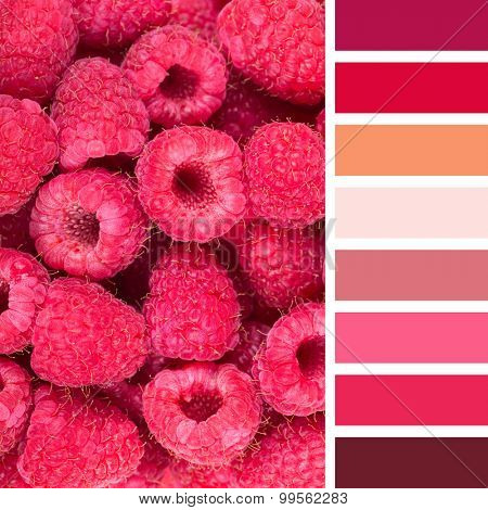 A background of fresh raspberries, in a colour palette with complimentary colour swatches.