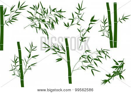 illustration with bamboo branches collection on white background