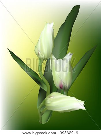 illustration with light orchid buds on green background