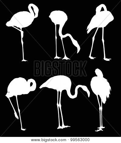 illustration with set of six flamingo silhouettes isolated on black background