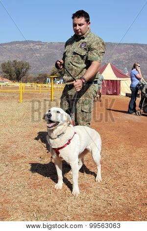 Trained Sniffer Labrador Dog, Drug, Narcotics And Explosives, With Handler.