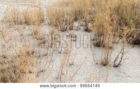 Arid Environment