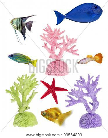 set of color corals and fishes isolated on white background