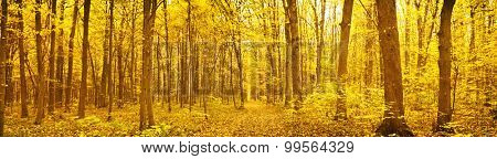 Panorama of  forest at autumn day